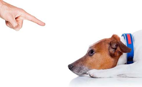 Como corregir la conducta destructiva de un perro