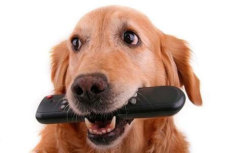 Si Tu Perro Destruye Todo en Casa, ¡Esto es lo Que Debes Hacer!