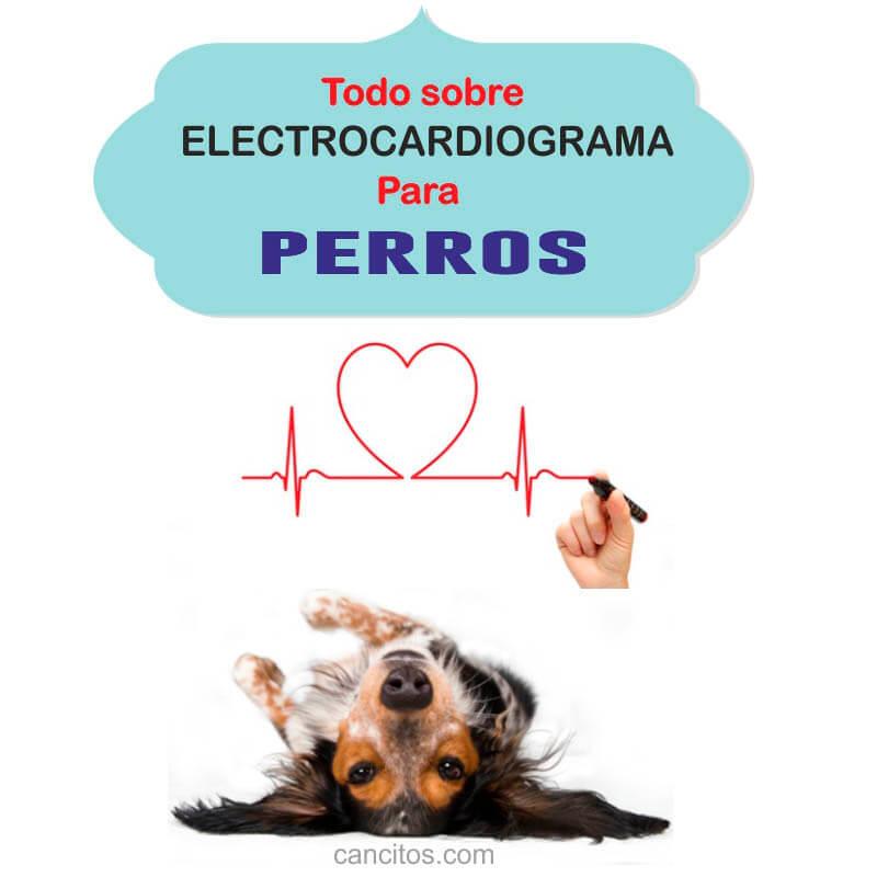Electrocardiograma y mi perro