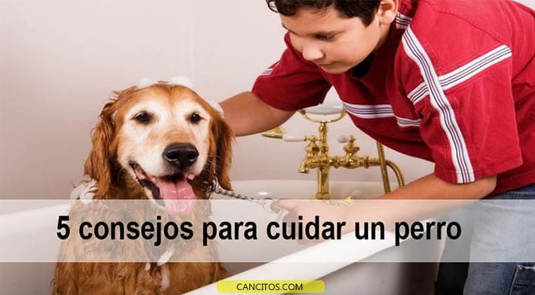5 consejos para cuidar un perro