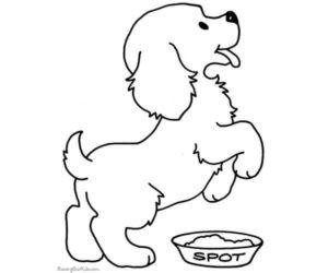 Plato de comida para perro