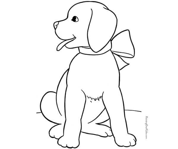 20 razas de perros yahoo dating 8