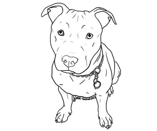 Dibujos Infantiles De Perros Para Colorear: Imagenes Para Colorear De Perros. Latest Perro Y Gato Para