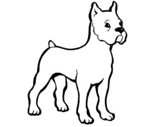 Perro boxer para colorear