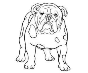 Perro bulldog para pintar