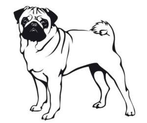 Perro pug