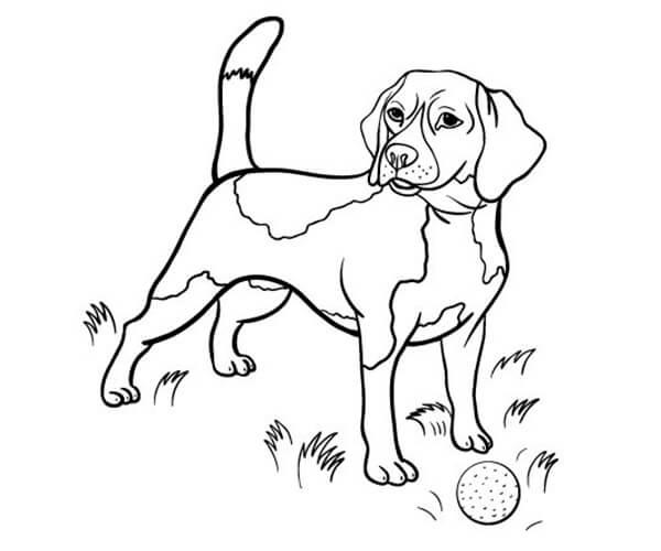 35 Imágenes De Perros Para Colorear E Imprimir