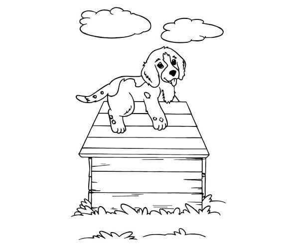 Casita para perro