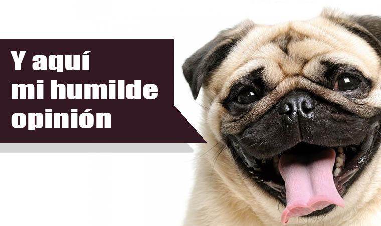 Consejos para comprar camas de perros