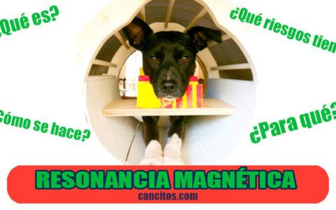 Que es la resonancia magnética en perros