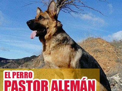 Foto de perro pastor alemán