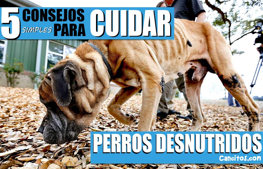 Perros con desnutrición