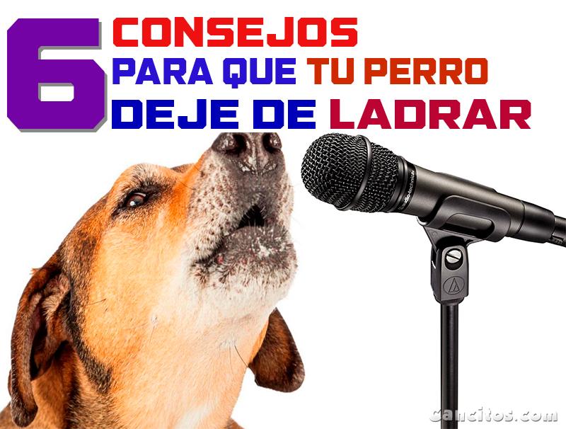 Ladridos De Perros 6 Maneras De Tranquilizar A Tu Mascota