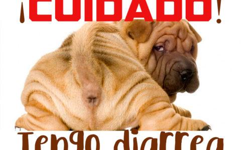 Como curar la diarrea en los perros