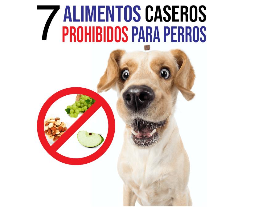 Lo que no deben comer los perros en casa