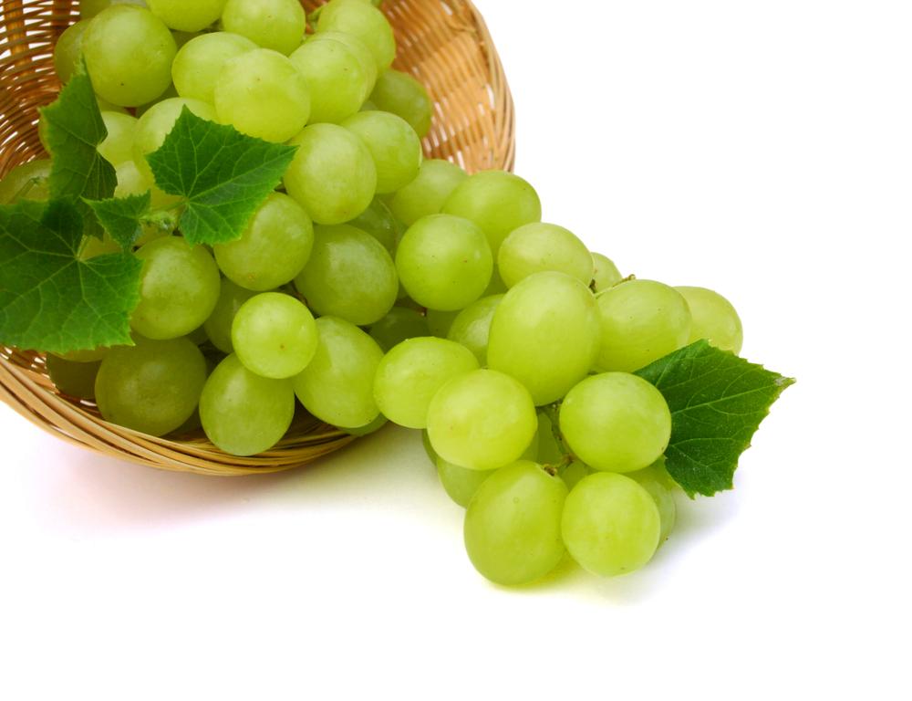 Los perros no pueden comer uvas