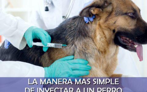 Inyecciones para perros