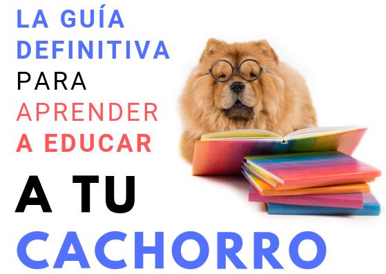 Guía definitiva: Cómo educar un cachorro de manera eficaz