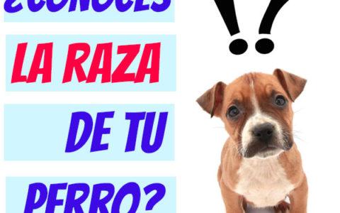 ¿Cómo saber que raza es mi perro?