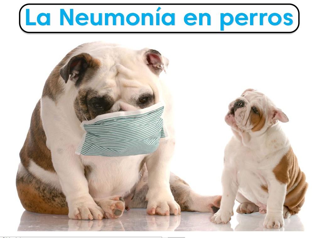 Perros con neumonía