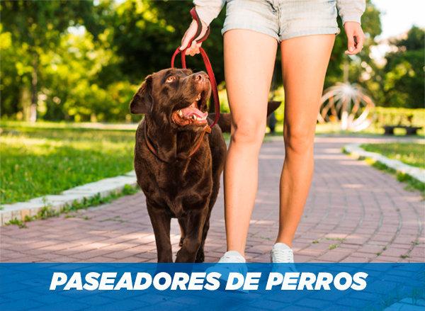 Paseadores de perros: ¿Qué son? ¿Cómo lo hacen? ¿Cómo elegirlos correctamente?